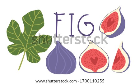 Fig vector cartoon elements and lettering set. The inscription