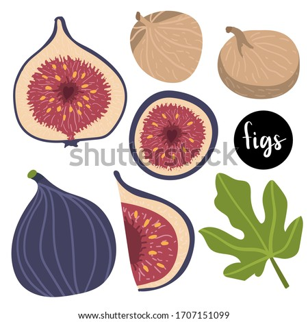 figs and dried figs, fig leaf isolated on white background. Vector illustration of fruits in a flat style. Natural sweets. Healthy food set.