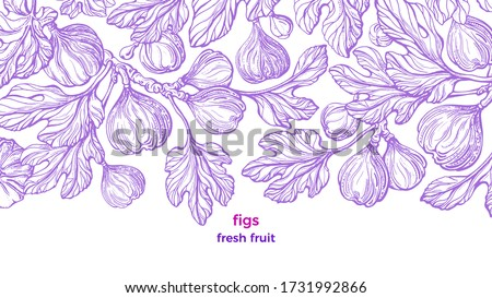 Figs plant. Vector vintage pattern. Art hand drawn illustration on white background. Botanical tree, branch, engraved fruit, texture leaves. Sweet exotic food. Summer plantation, raw harvest, garden