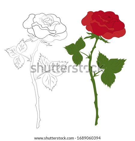 Figure roses with and without color. the contour of a rose and a beautiful red rose. Vector illustration