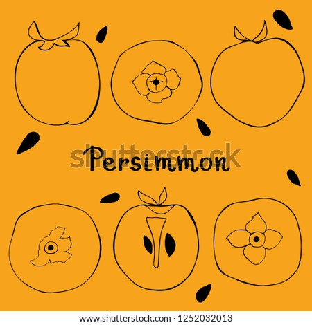 Figure silhouette of persimmon. View from above, whole persimmon, cut persimmon. Tropical fruits.