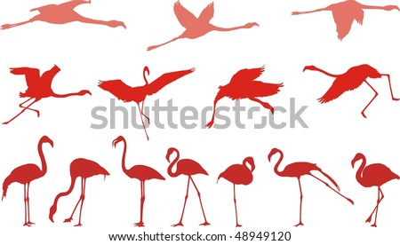 Filed vector illustrations of birds, pink flamingos