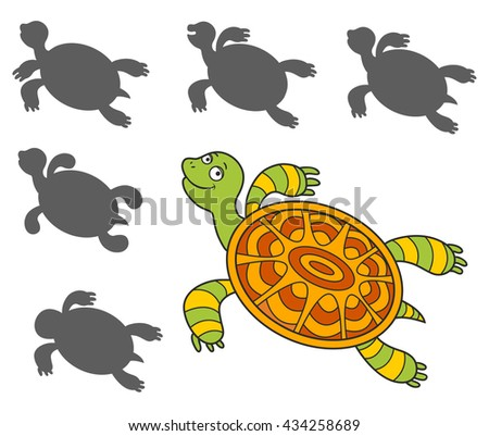 how to find a turtle