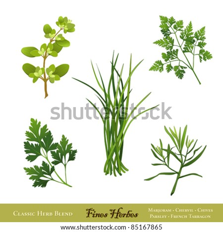 Fines Herbes. Traditional French herb blend for cooking: Sweet Marjoram, Chives, Chervil, Italian Flat Leaf Parsley, French Tarragon isolated on white. EPS8 compatible. See more herbs in this series.