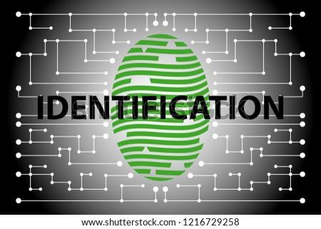 Fingerprint identification, person identification. Vector illustration.