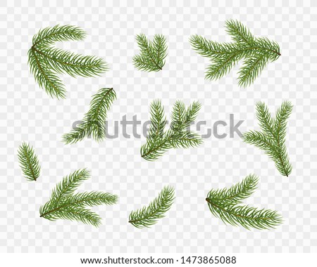 fir branches isolated on