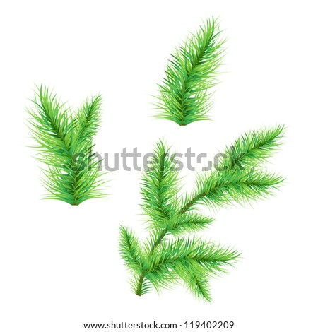 Fir-Tree Branch Isolated On White Background, Vector Illustration #119402209