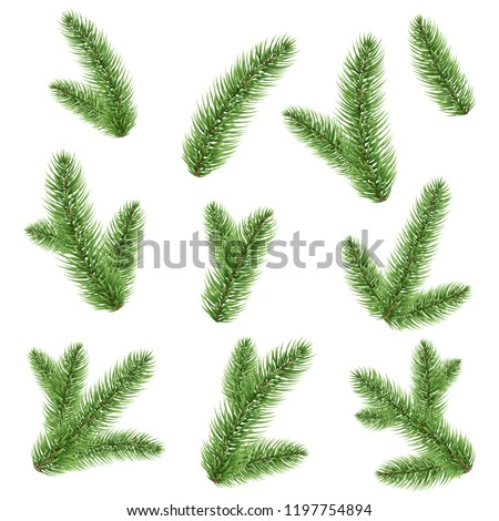 Fir-tree Branch Isolated, Vector Illustration