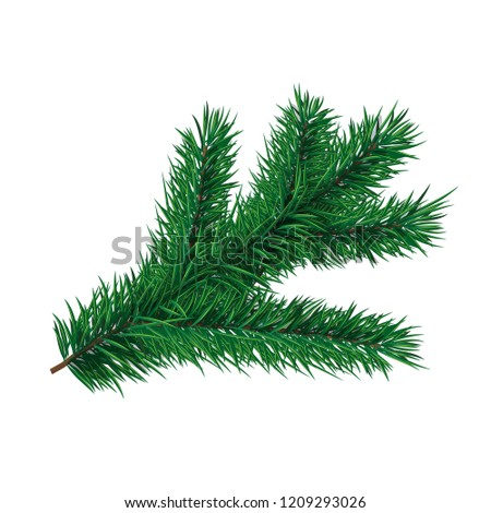 Fir-tree branch. Vector element for christmas or new year greeting card #1209293026