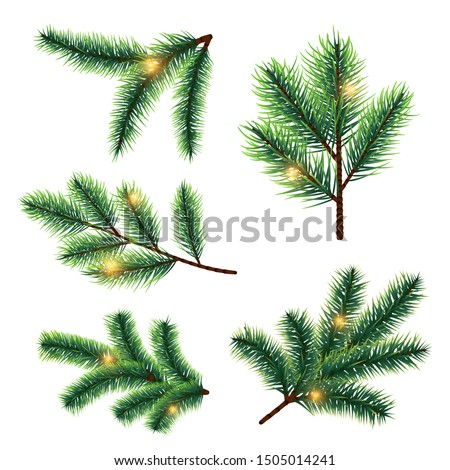 Fir tree branches with lights vector isolated on white background #1505014241