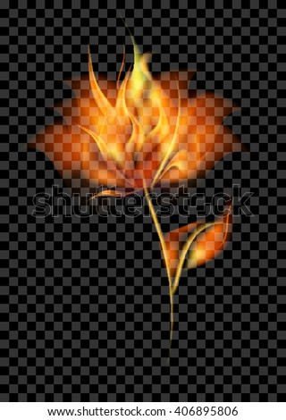 fire flower vector flame