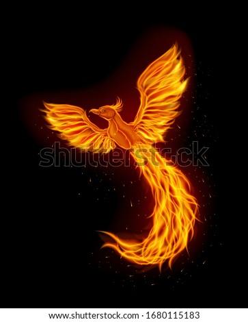 fire phoenix mascot logo design