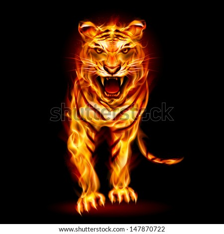 Fire tiger. Illustration on black background for design