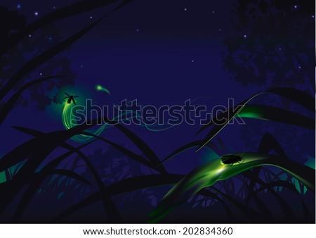fireflies small lighting bugs