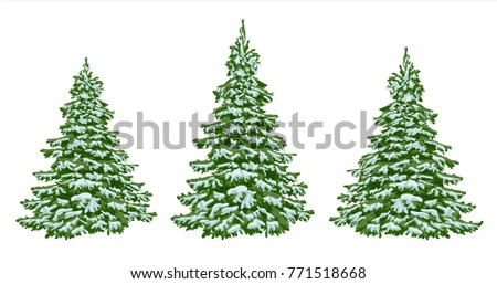 Stock Photo Firs. set of beautiful Christmas trees in the snow. Christmas. Winter. Nature in details. Drawing. Vector. Eps 10.