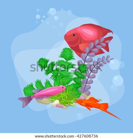 fish  aquarium  vector  fish