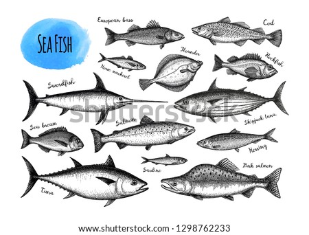 Fish big set. Ink sketches isolated on white background. Hand drawn vector illustration. Retro style.