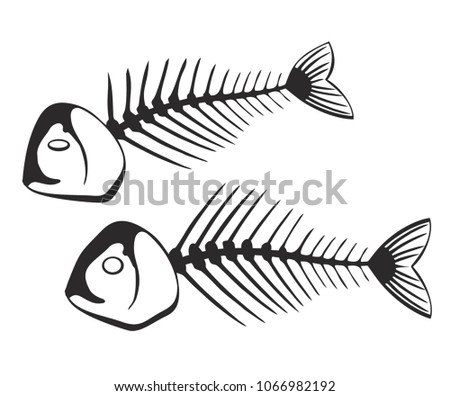 Fishbone Anatomy Vector