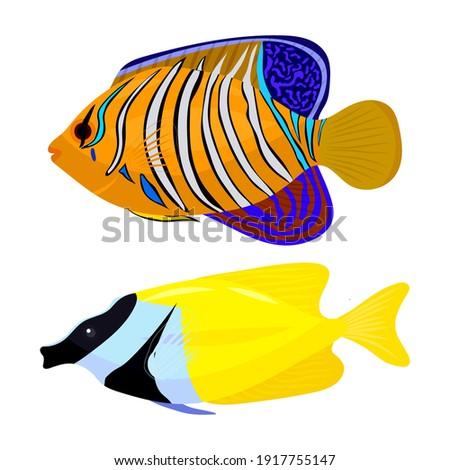 fish fox yellow and fish angel