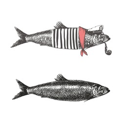 Fish in vintage style. Fish collection vector illustration.