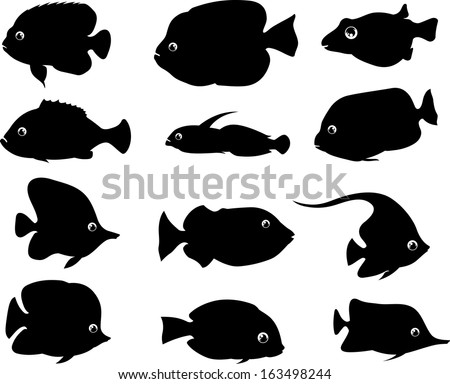 fish silhouette of different