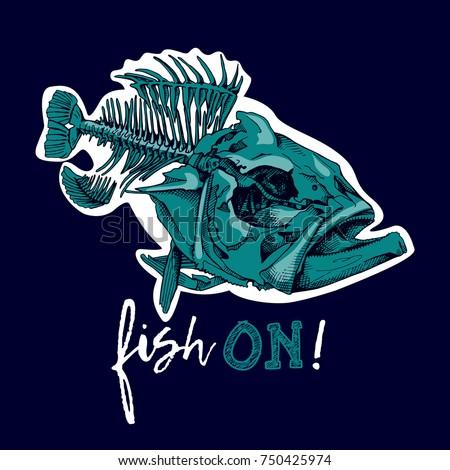 fish skeleton  serranidae  on a
