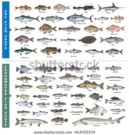 Fish sorts and types. Seawater and freshwater fish vector illustrations. Over fifty different hand drawn illustrations of sea and inland fishes with written names. Sea, river and lake fishes.