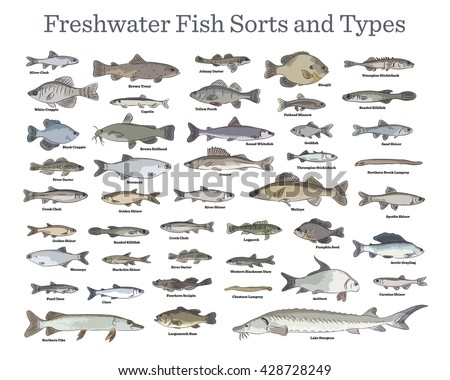 fish sorts and types various