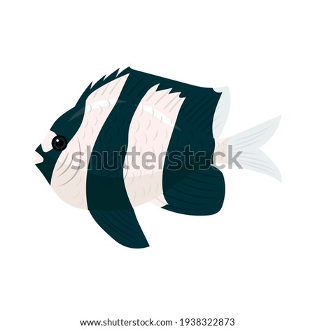 fish three striped dascyllus