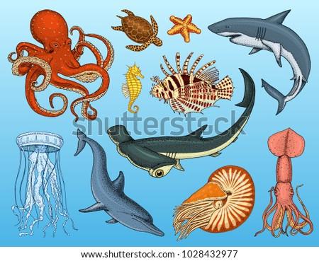 fishes set or sea creature