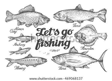 Fishing. Hand drawn vector fish. Sketch trout, carp, tuna, herring, flounder, anchovy