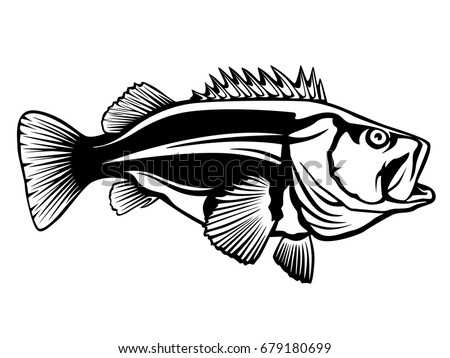 largemouth bass fish logo vector - download free vector art, stock