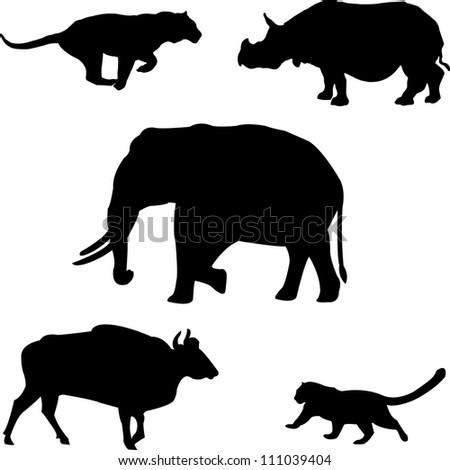 Five big wild beasts in India: elephant, rhino, gaur,tiger, leopard