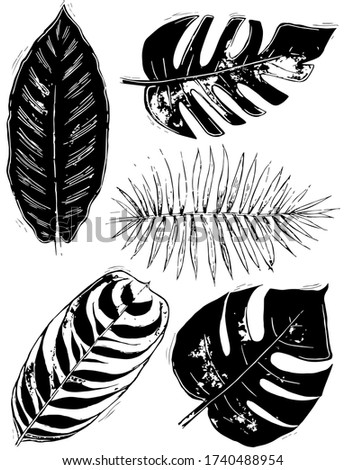 five black and white tropical