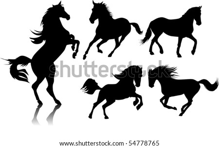 five black horse galloping on a white background;