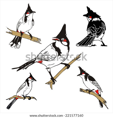 Stock Photo five character of Red-whiskered bulbul birda drawing vector
