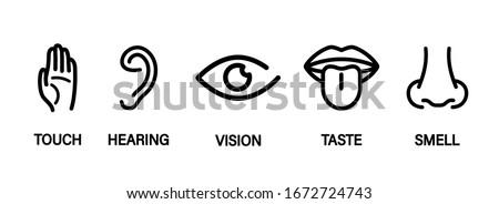 five human senses  hearing