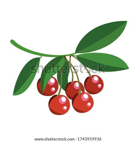 five juicy red cherries on a