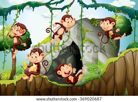 five monkeys living in the