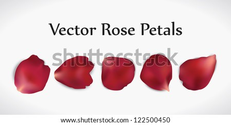five realistic vector red rose