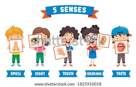 Five Senses Concept With Human Organs Foto stock ©