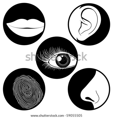 stock vector : Five senses icons - vector