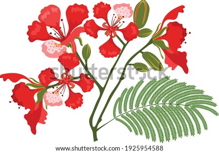 flamboyant red flowers with leaves Stock fotó ©