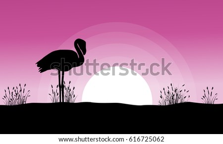 flamingo at sunset landscape