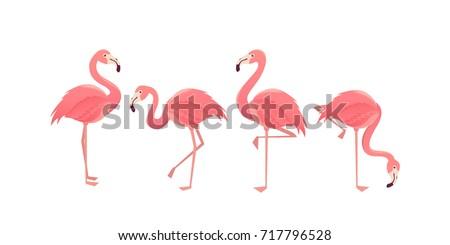 flamingo bird illustration