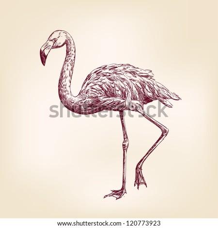 flamingo hand drawn vector llustration realistic sketch