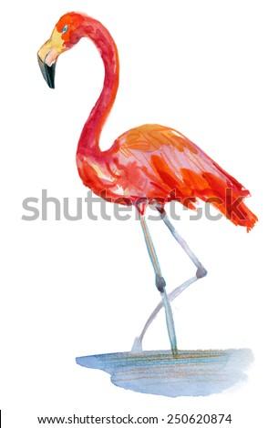 flamingo in the water vector