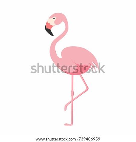 Flamingo isolated on background. Pink flamingo standing on one leg. African exotic bird. Vector