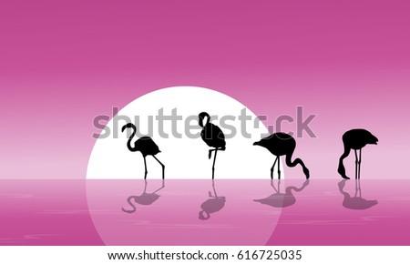 flamingo on lake scenery