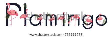 flamingos tropical bird letter